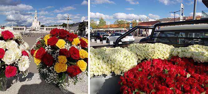 Roses in Fatima